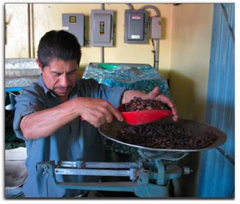 Chocolate Grinder Florentine Antonio Andres